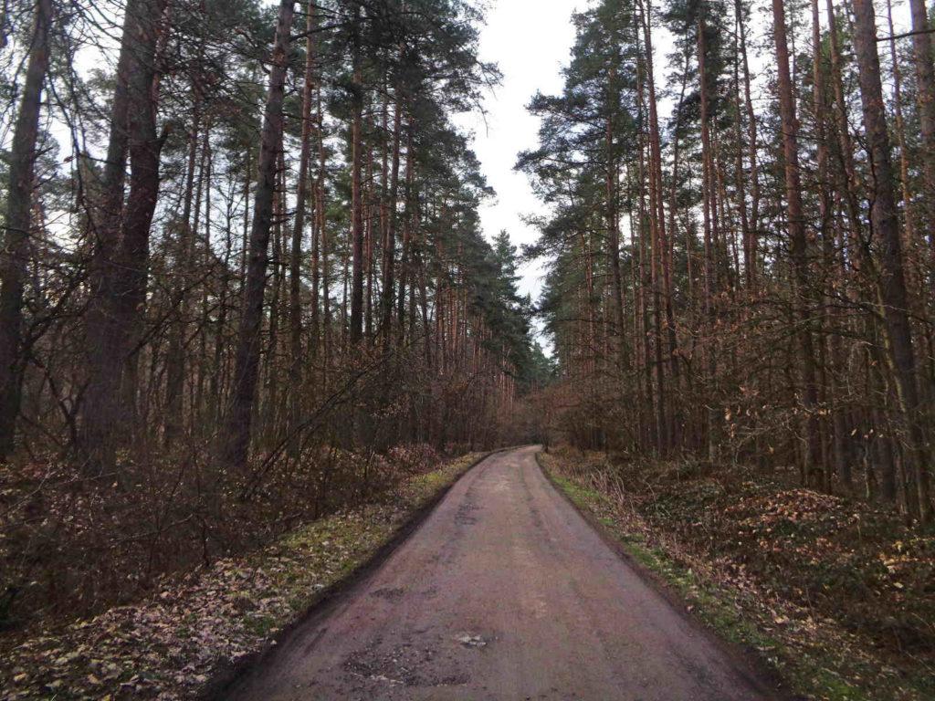Puszcza Niepołomicka, Szlak Żeleńskich