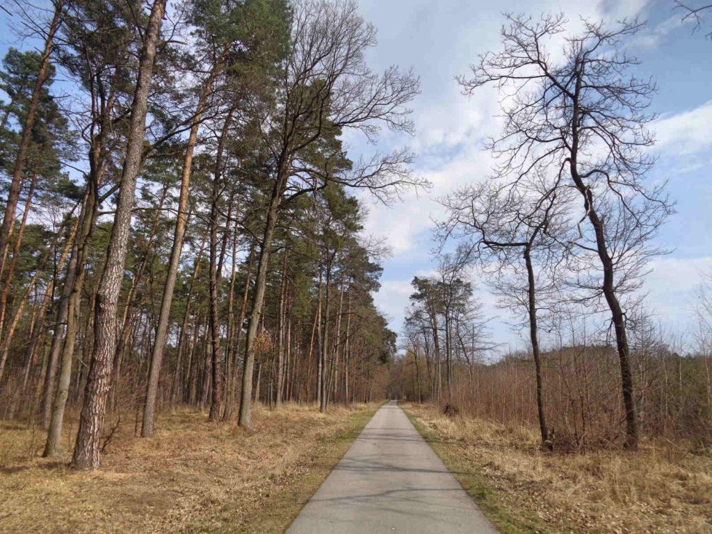 Puszcza Niepołomicka, trasy rowerowe