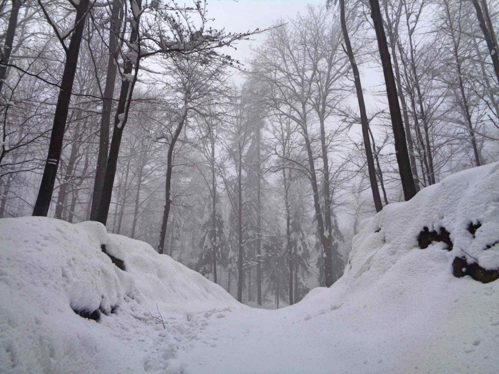 Czarny szlak na Przełęcz u Panienki