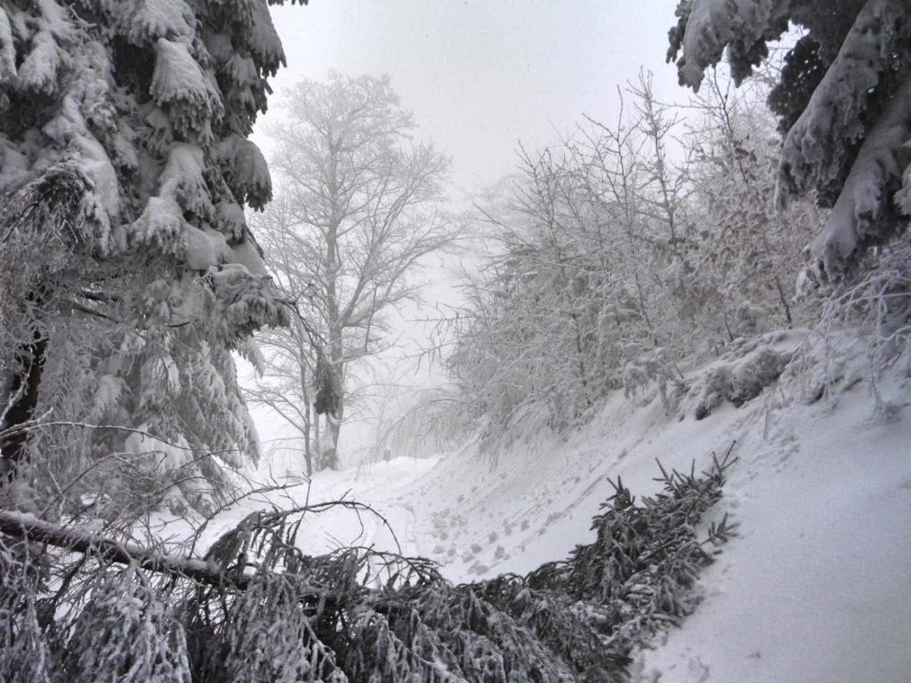 Szlak na Przełęcz u Panienki zimą