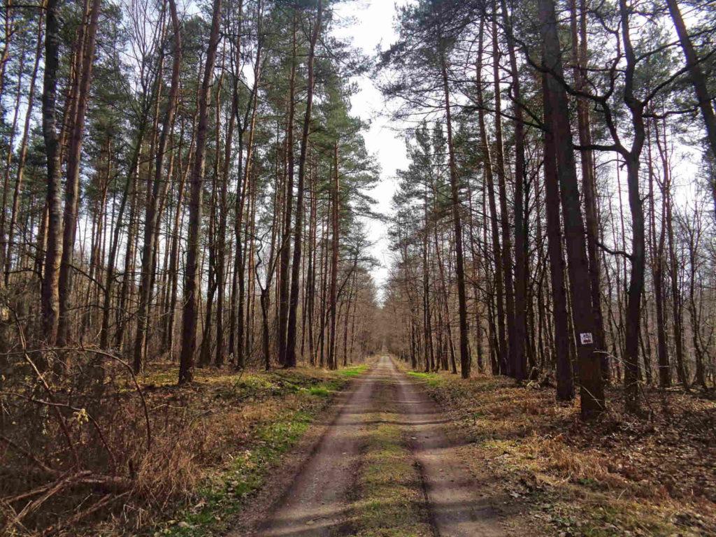 Szlak Żeleńskich, boczny