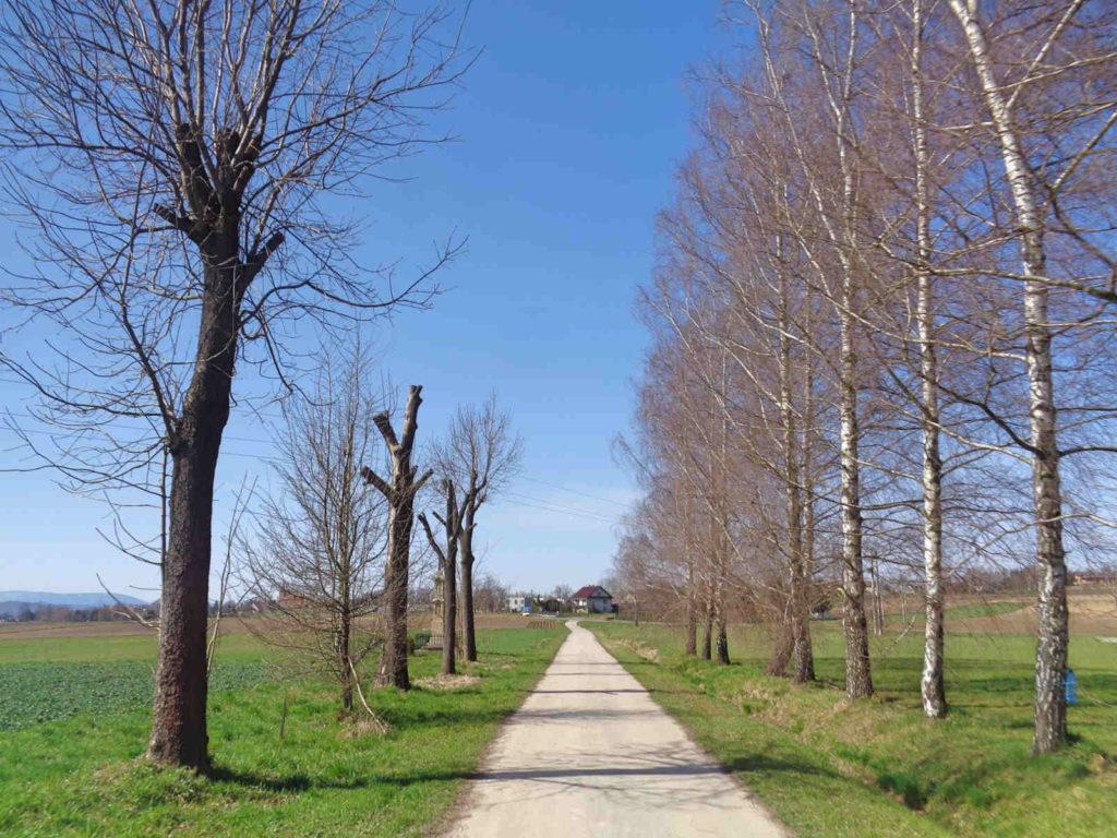 Szlak Żeleńskich, droga na Niegowić