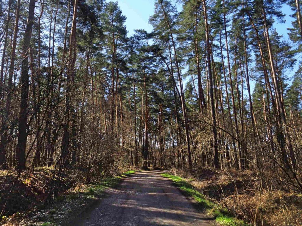 Szlak Żeleńskich w Puszczy Niepołomickiej