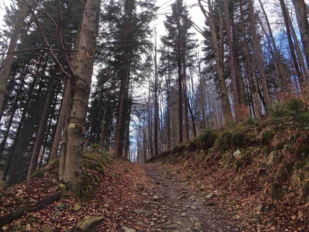 Isepnicka Przełęcz, szlak od Wielkiej Puszczy