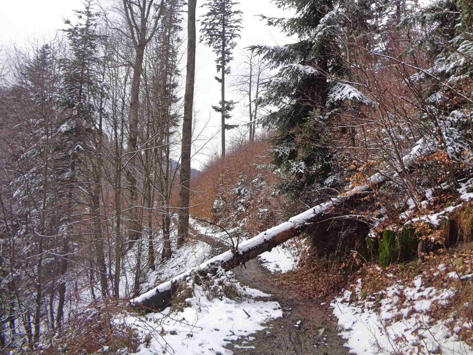 Isepnicka Przełęcz, szlak żółty