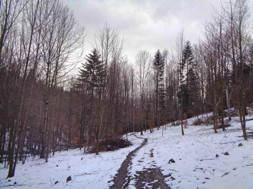 Przełęcz Bukowska, żółty szlak