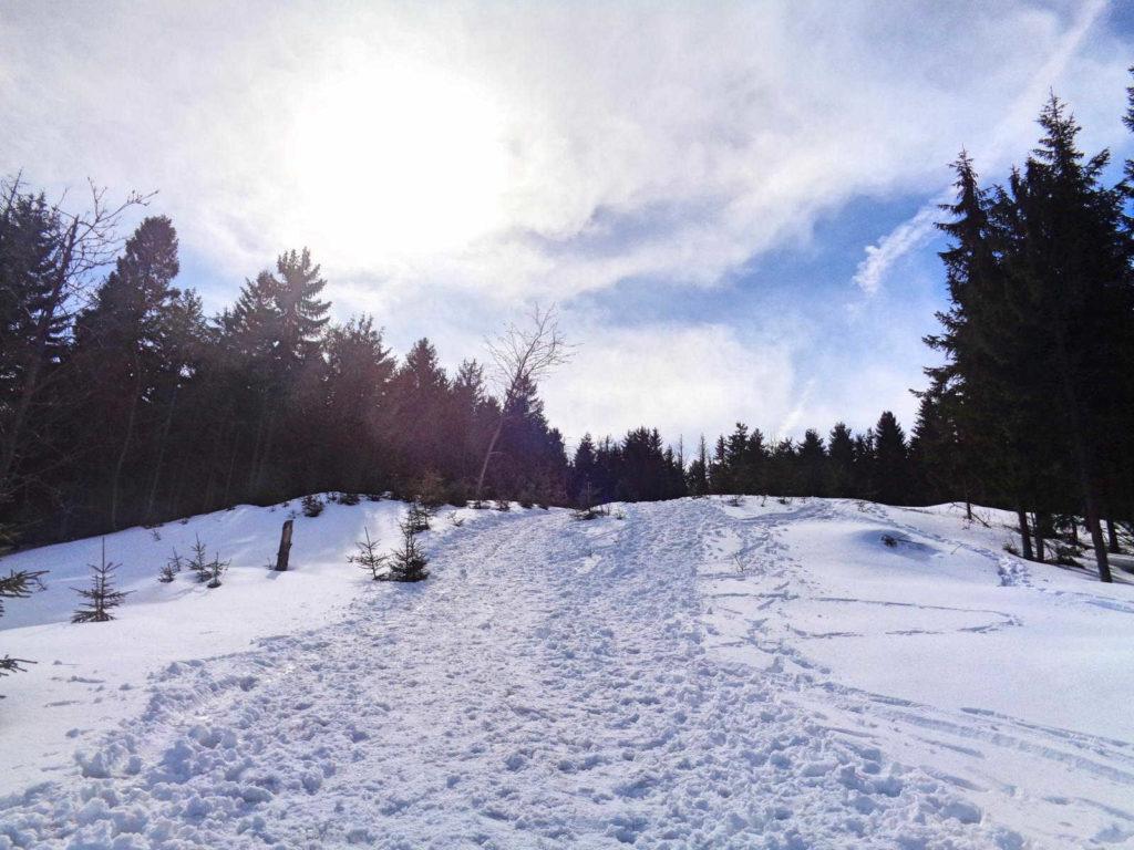 Szlak na Czoło Turbacza