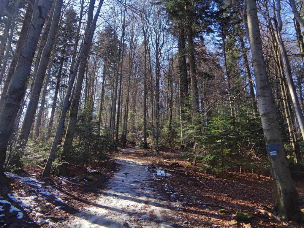 Turbacz, niebieski szlak od Koninek