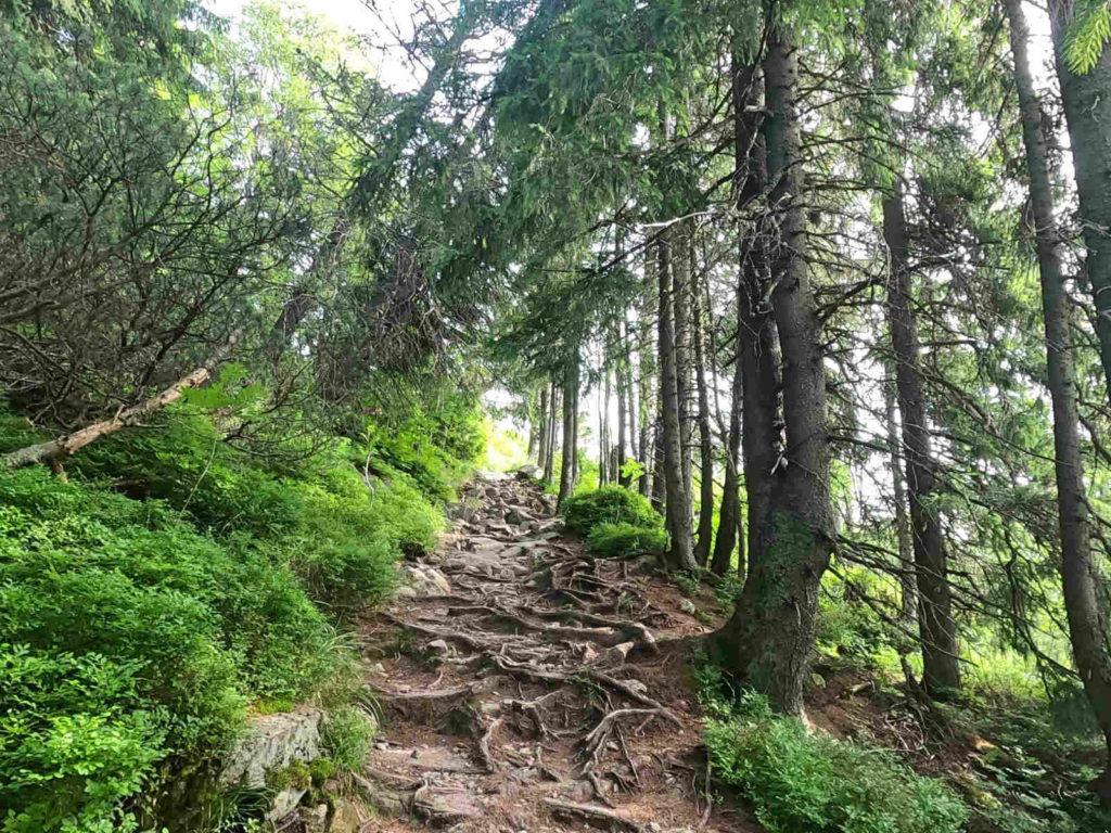 Łomnicki Staw, szlak zielony