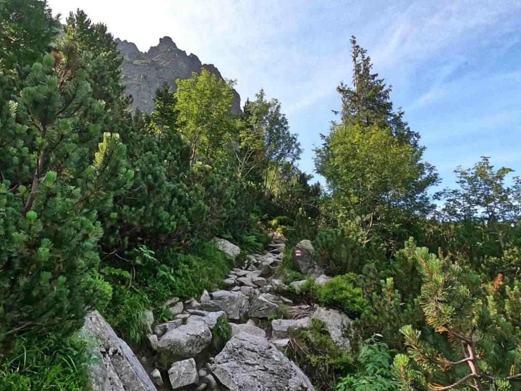 Szlak na Przełęcz pod Osterwą