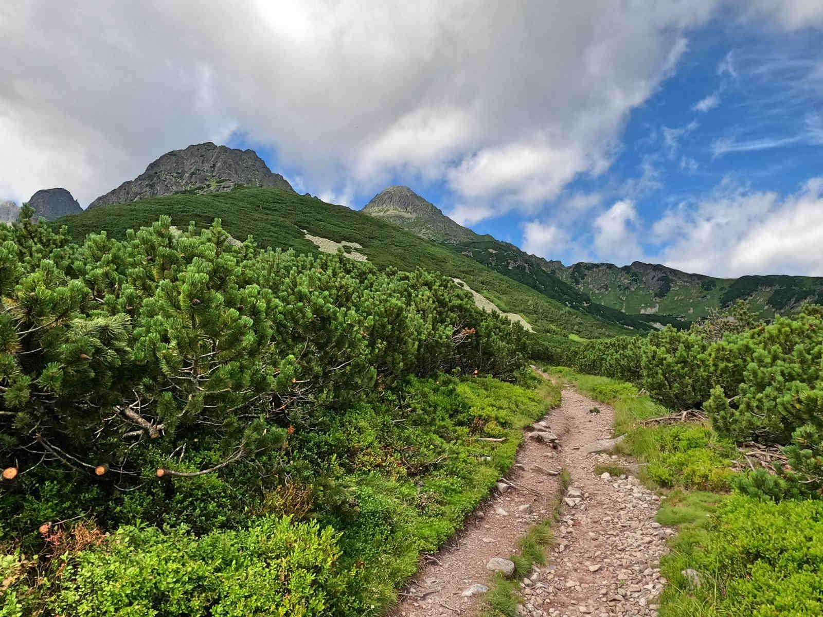 Zielona Dolina Kieżmarska, czerwony szlak