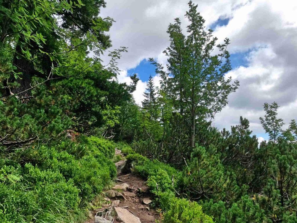 Zielona Dolina Kieżmarska, szlak czerwony