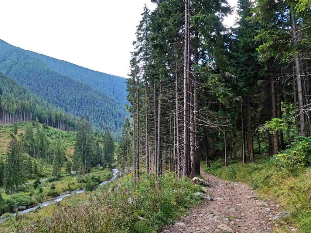 Dolina Żarska, niebieski szlak